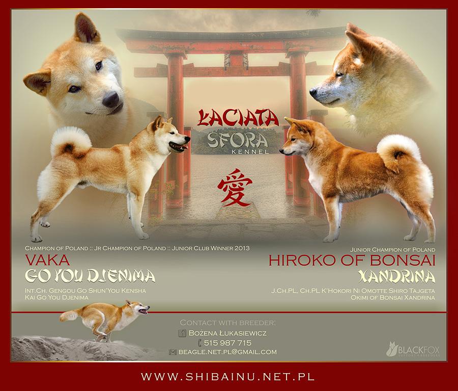 http://shibainu.com.pl/wp-content/uploads/2014/12/zap_smalla.jpg